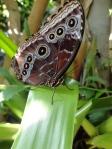 Blade Butterfly