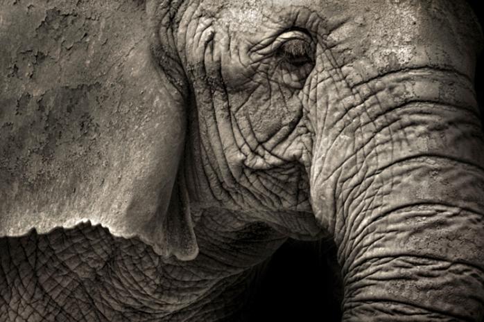 Elephant 5