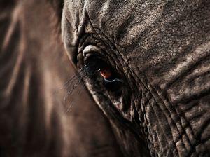 Elephant - Nat. Geo. 3