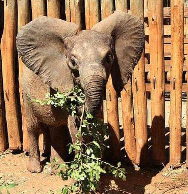 Rorogoi - Sheldrick Wildlife Trust