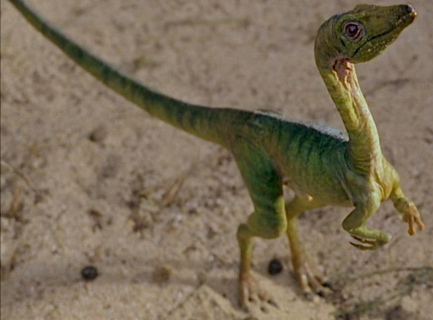 4 - Compsognathus