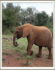 Rorogoi - April 2015 - photo courtesy of DSWT