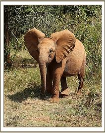 Rorogoi - August 2014 - photo courtesy of DSWT