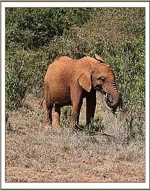 Rorogoi - February 2015 - photo courtesy of DSWT