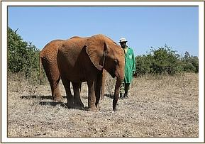 Rorogoi - March 2015 - photo courtesy of DSWT