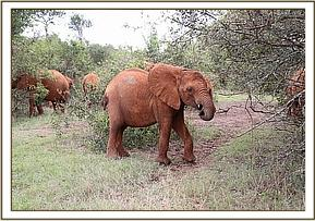 Rorogoi - September 2014 - photo courtesy of DSWT