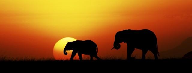 Elephants 2016